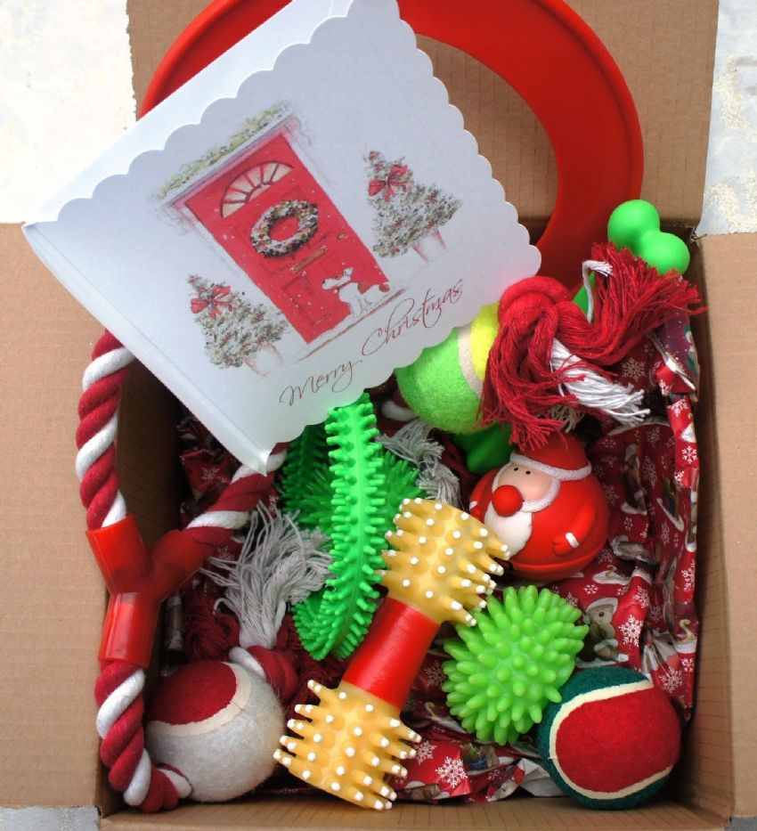 11 x ASSORTED PET DOG SQUEAKY CHEW ROPE BALL FUN CHRISTMAS DOG TOYS & XMAS CARD